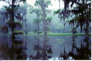 Foggy_Caddo_Lake2