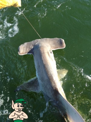 Scott Hammerhead Photo