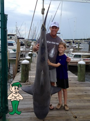 Bull Shark Photo