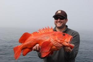 Mat Rockfish