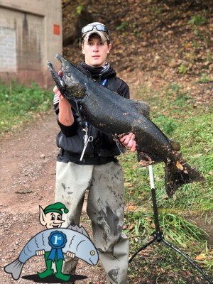 Alex Kowlaski Salmon Fishing Oak Orchard, NY